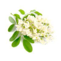 Extract de flori de salcâm alb